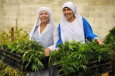"""Las """"monjas"""" de la marihuana necesitan abandonar sus tácticas"""