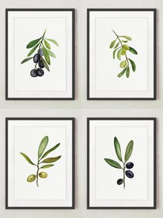 Black and Green Olive Fine Art Print Set of 4. Green Olive Tree Watercolor…