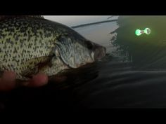 103 Best Crappie Fishing images in 2019 | Crappie fishing