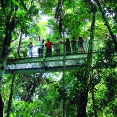 """1 Day Cape Tribulation & Daintree Rainforest - Eco-Tour 'Mid-Size""""' - Hotels and Tours - Australia Australia Travel Guide, Australia Tours, Airlie Beach, Queensland Australien, Daintree Rainforest, Destinations, Great Barrier Reef, Countries Of The World, Travel Inspiration"""
