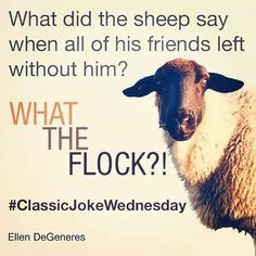 What the Flock?!