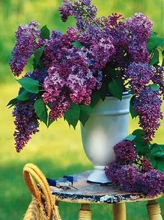 lilacs.    These were my Grandma's and mom's favorite flowers(besides yellow roses for my mom)....need to get a lilac bush/tree for here at home....=)