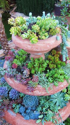 succulents (probably my favorite plants, they are nearly impossible to kill and they're all so unique and pretty) :)
