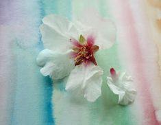 ΒΟΛΤΑ ΣΤ΄ΟΝΕΙΡΟ: Σεφέρης Floral, Flowers, Plants, Plant, Royal Icing Flowers, Flower, Flower, Florals, Planets