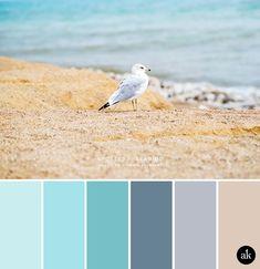 a #seabird inspired #colorpalette // light #aqua, #sky blue, #gray-blue, #sand || #akulakreative