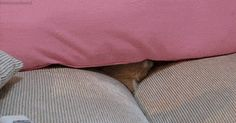 This Kitty Is Totally Going To Win At Hide And Seek!  More cute images of cats and kittens, visit http://pewpaw.com/