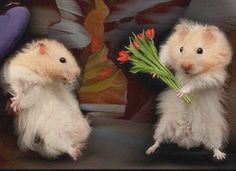 How adorable These little hamsters Funny Valentines Day Pictures, Funny Love Pictures, Love Quotes Funny, Funny Animal Pictures, Funny Pics, Humorous Quotes, Pictures Images, Bing Images, Baby Animals