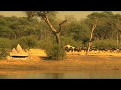 Zimbabwe The Hide Safari Camp in Hwange