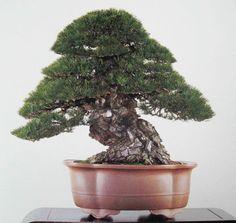 Bonsai Bark | Promoting and Expanding the Bonsai Universe | Page 72