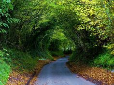 Tree Tunnel - Dancersend, England