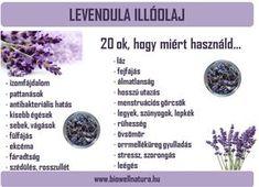 A levendula illóolaj jótékony hatásai