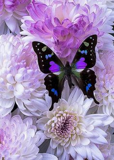 FLOWER POWER Butterfly Kisses, Butterfly Flowers, Beautiful Butterflies, Beautiful Flowers, Purple Flowers, Butterfly Photos, Picture Of A Butterfly, Blue Butterfly, Purple Butterfly Wallpaper