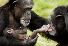 Ape Family ;)
