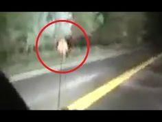 Horrific moment impatient motorist drives car into back of horse unseating rider Bigfoot Documentary, Bigfoot Encounters, Giant Skeleton, Bigfoot Sightings, Bigfoot Sasquatch, Cryptozoology, Mystery, Creatures, Horses