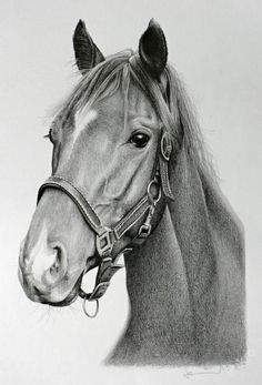 I remember you Horse Drawings, Pencil Art Drawings, Animal Drawings, Art Sketches, Tiger Artwork, Horse Artwork, Horse Drawing Tutorial, Stippling Art, Horse Sketch