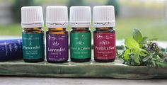 the best oils Living Essentials, Best Oils, Young Living Essential Oils, Shampoo, Wellness, Personal Care, Good Things, Bottle, Beauty