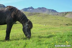 Islândia – cavalo no campo perto de Grundarfjörður