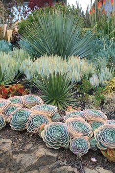 succulent landscapes, leaf & clay