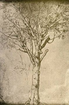 Drawing a Tree - Leonardo da Vinci