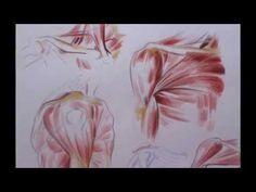 DIBUJOS DE ANATOMÍA ARTÍSTICA - YouTube