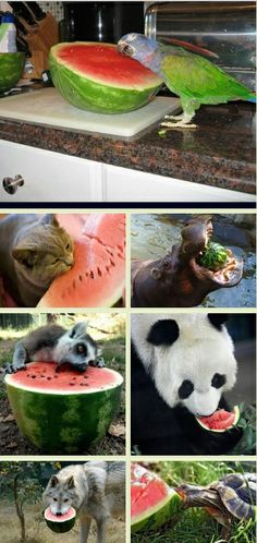 Everyone loved the watermelon except....click through the pin to find out :)