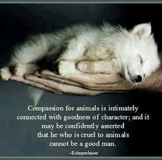 Goodness of character <3 Be kind to every living being.