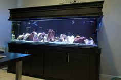 aquarium stand and canopy