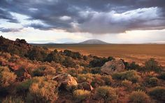 Sagebrush is ubiquitous throughout Northern New Mexico, but especially on the Taos Plateau and in the Río Grande Gorge. Photo by Geraint Smith, geraintsmith.com