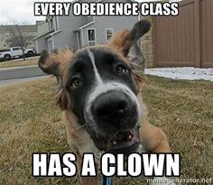 17 Dogs Who Discreetly Bend Their Owner's Rules Disobedient Dog - every obedience class has a clown. www.facebook.com/...