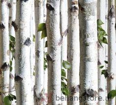 http://www.behangstore.nl/catalog/207,8519/8358/Behang_/_Spits_ _Dutch/Dutch_Bluff_behang/Dutch_berkenbos_bomen_wit
