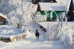 National Geographic Your Shot Snowy Day, Winter Photos, National Geographic Photos, Winter Snow, Beautiful Horses, Romania, Sunny Days, Winter Wonderland, Amazing Photography