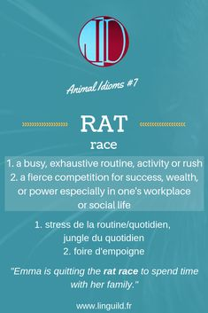"Animal idiom: ""Rat race"" 🐀 #EnAvantAnglais #EnglishIdioms #Idioms #Anglais #ApprendreAnglais LinguiLD /Idioms/ (Design by LinguiLD)"