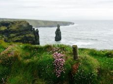 """Bromore Cliffs  Ballybunion Things to see at Bromore Cliffs are: 1  Nap Time for the Baby Seals 2  Leamnamuice Waterfall 3  Glenachoor Waterfall 4  Bromore Promontary Fort & the Seals Caves 5  Starlings diving to their roost in Cuas na Druide (The Starlings Cave) 6  The Haggards Strands,The Periwinkle Hole out to Doon Point and """"Sweet Doon Bay"""" 7  Bromore Promontary Fort 8  Daisies and Primroses at Bromore Cliffs."""