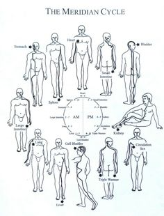 What Is Acupressure The meridian cycle. Circadian rhythm can be set by the sun and moon light. Natural light, blue or white spectrum, is what tells our bodies what time it is, which hormones to produce, and basically how to function! Meridian Acupuncture, Acupuncture Points, Acupressure Points, Qigong, Spiritual Eyes, Yoga Anatomy, Endocannabinoid System, Medical Anatomy, Traditional Chinese Medicine
