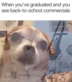 """PTSD Chihuaha Memes Are About Terrifying Flashbacks - Funny memes that """"GET IT"""" and want you to too. Get the latest funniest memes and keep up what is going on in the meme-o-sphere. Funny Shit, Funny Cute, The Funny, Funny Stuff, Funny Laugh, Super Funny, Funny Things, Memes Humor, Nfl Memes"""