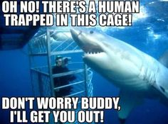Shark helping out a human, isn't he so nice!