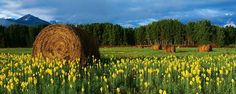 Panorama of flowers with a good scenery.