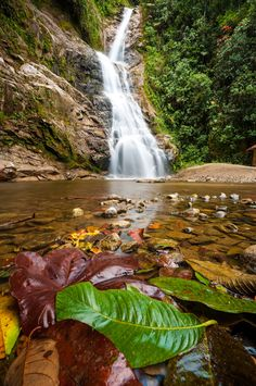 Falls - Zamora, Zamora-Chinchipe- Ecuador long hike to get here but it was worth it!