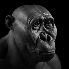 Paranthropus aethiopicus forensic facial reconstruction by Gabriel Viñas Theory Of Evolution, Human Evolution, Forensic Facial Reconstruction, Biological Anthropology, Human Fossils, Early Humans, Photographs Of People, Prehistoric Animals, Before Us