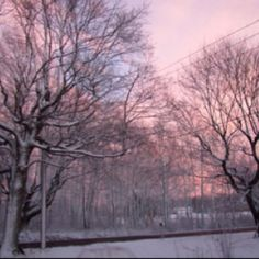 #tree #pink #magick #wicca #photography