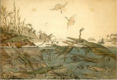 "Duria Antiquior – A more Ancient Dorset"", a drawing produced by geologist Henry De la Beche and sold as prints to support fossilist Mary Anning, at the time in financial difficulties (image in public domain). This scene, with various swimming and flying reptiles, plants, mollusks, fishes and even feces produced by the activity of the animals, can be regarded as one of the first reconstructions of an ancient environment."