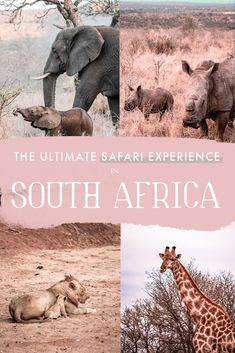 Rhino River Lodge: The Best Game Reserve to See Rhinos in South Africa - No Hurry To Get Home - Top Trends Animal Experiences, River Lodge, Curious Creatures, Game Reserve, Africa Travel, Best Games, Where To Go, Traveling By Yourself, Travel Inspiration