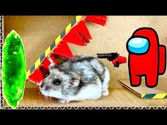 🐹 Hamster Maze with a Among Us 😱[OBSTACLE COURSE]😱 + BONUS - YouTube Obstacle Course, Maze, Adventure, Youtube, Animals, Videos, Animales, Animaux, Labyrinths