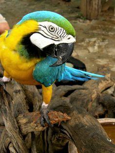 Thailand Norway, Parrot, My Photos, Birds, Butterflies, Thailand, Pictures, Animals, Parrot Bird
