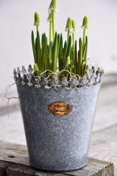 spring buds in an ornate tin