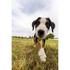 Say hi to Benzo supplies supplie Amphibians, Reptiles, Mammals, Cute Dogs Images, Say Hi, Free Photos, Pet Adoption, Pet Supplies, Funny Animals