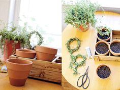 DIY rosemary topiaries