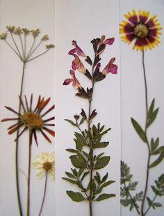 pressed flower bookmarks