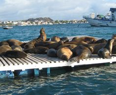 Sea lions resting on