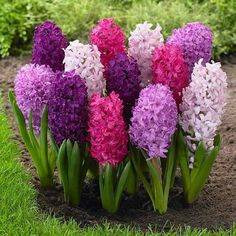 'Hyacinth Bouquet (Bucket,) the Lady of the House speaking.'
